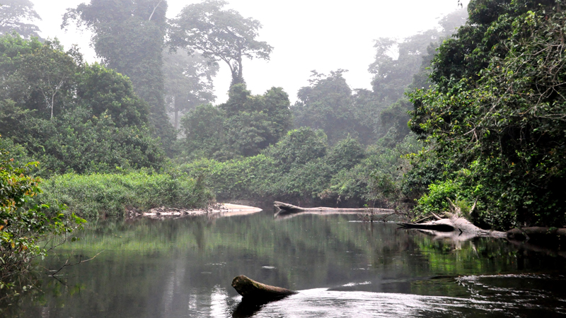 Image of a jungle scene, with a river and a boat